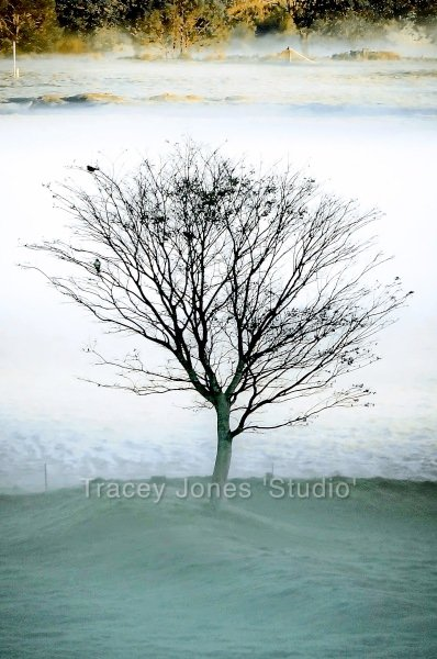 ...the birds, the tree and the mist..