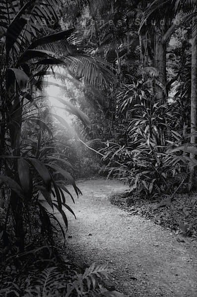 ...rainforest path.